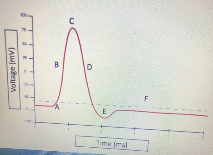 Solved Action Potential Graph Labelat Which Letter Are 1 Chegg Com