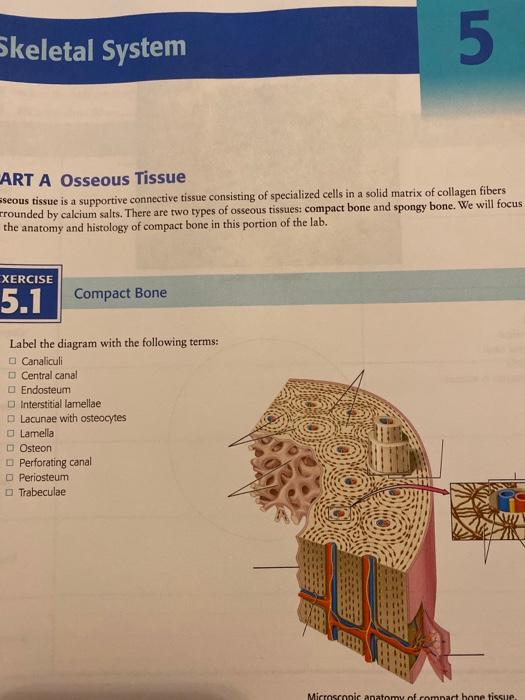 Solved Skeletal System 5 Art A Osseous Tissue Seous Tiss Chegg Com