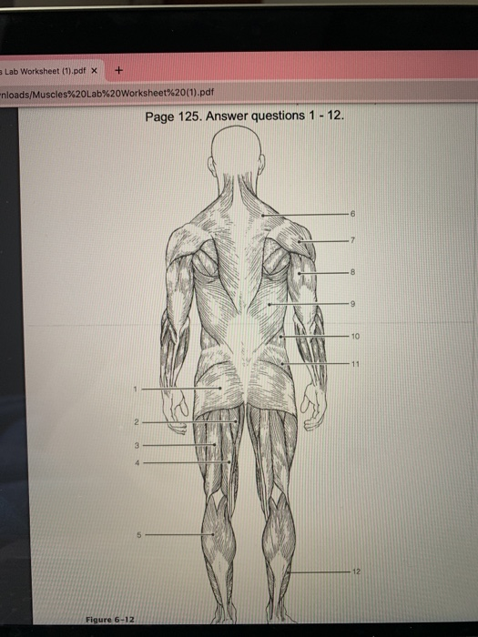 Solved: 124 Anatomy & Physiology Coloring Workbook 26. Ide... Chegg.com