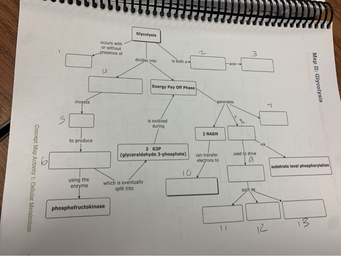 Oxidative Phosphorylation Concept Map