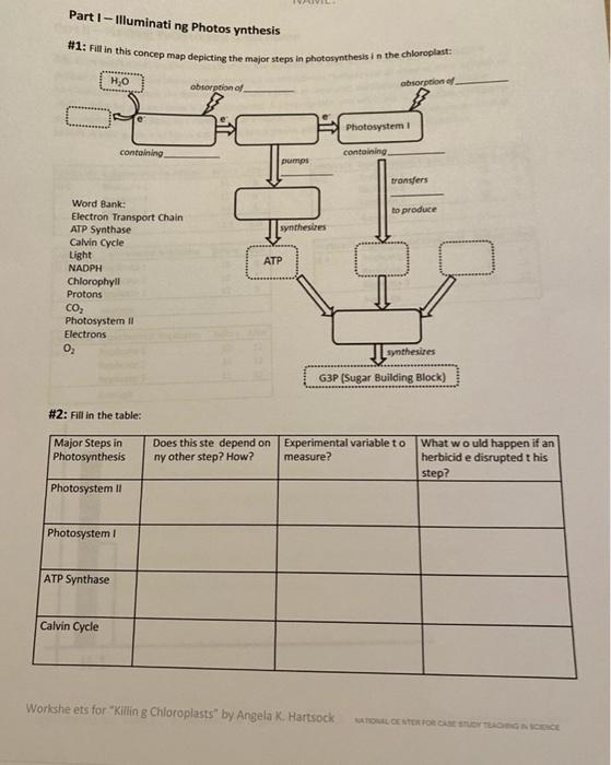 18+ Illuminating photosynthesis worksheet Live