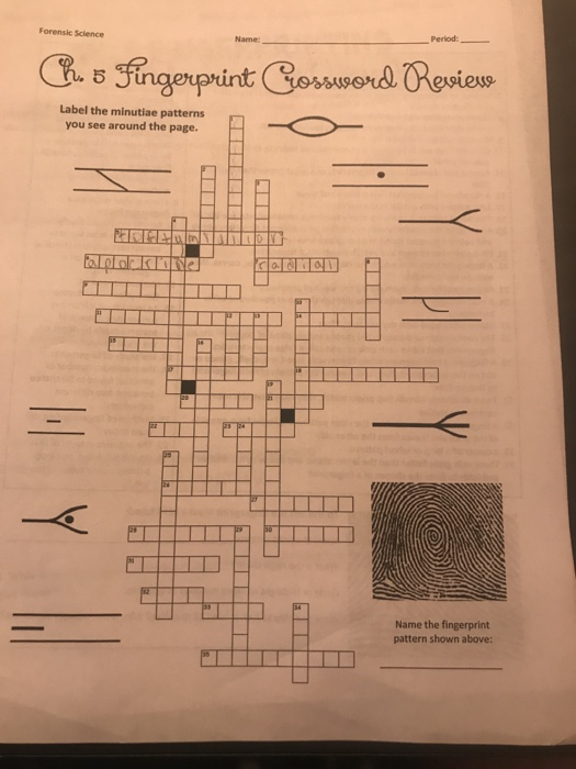 Solved Across Clues Dowen Gues 1 Fingerprints Are This Ty Chegg Com