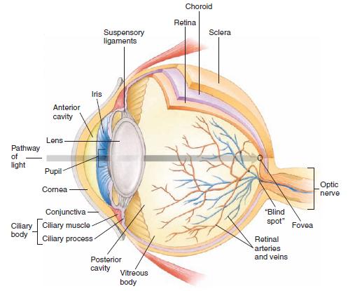 Biology Eye Diagram Label Wiring Diagram