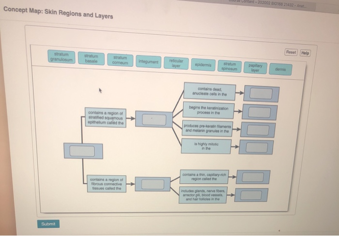 skin regions and layers concept map Solved Hent 202002 10188 21432 Ant Concept Map Skin Re