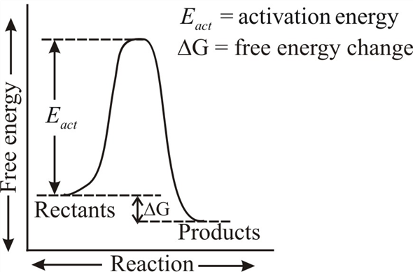 A Chemical Reaction Has An Activation Energy Manual Guide