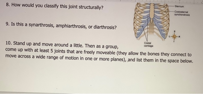 Solved Articulations How Does The Anatomy Of A Joint Rel Chegg Com The costal cartilage of 1st rib is connected with manubrium sterni by a plate of. articulations how does the anatomy