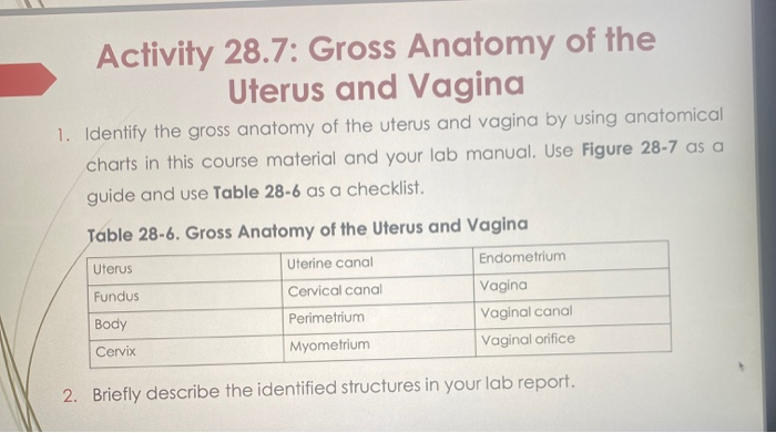 Woman With Two Vaginas Two Wombs And Two Cervixes Reveals Manual Guide