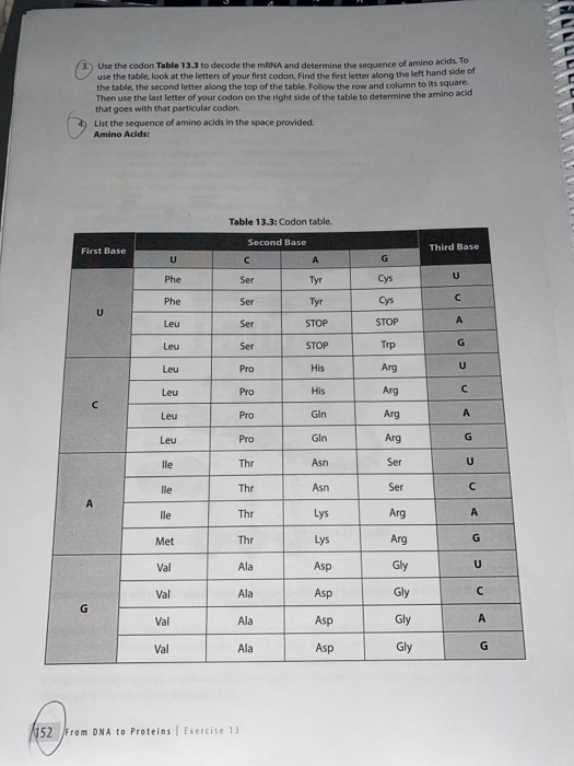 Solved 3 Use The Codon Table 13 To Decode Mrna An Chegg Com