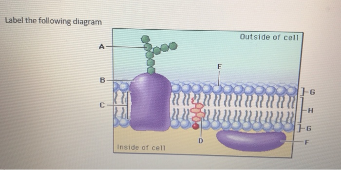 Solved: Label The Following Diagram Outside Of Cell OG NNN... | Chegg.com