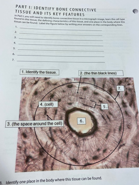 Solved Part 1 Identify Bone Connective Tissue And Its Ke Chegg Com