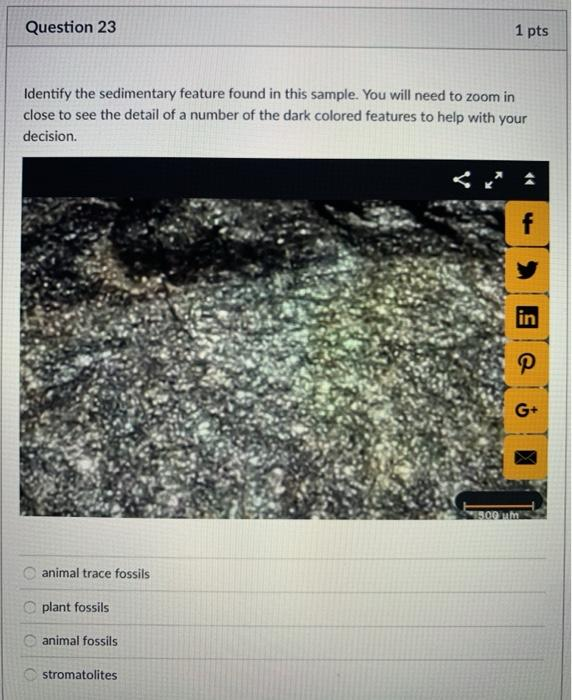 Question 23 1 pts Identify the sedimentary feature found in this sample. You will need to zoom in close to see the detail of