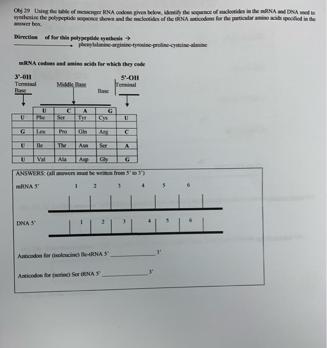 Solved Obj29 Using The Table Of Messenger Rna Codons Give Chegg Com