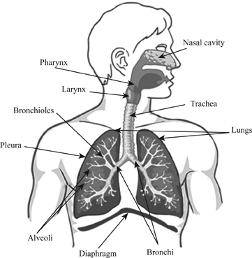 Definition Of Components Of The Respiratory System Chegg Com