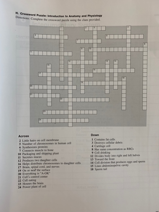 Solved H Crossword Puzzle Introduction To Ossword Puzzl Chegg Com