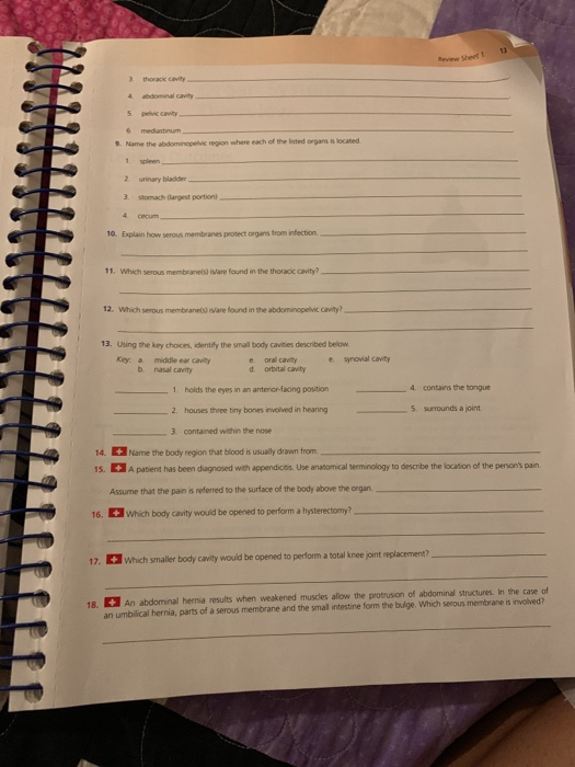 The Language Of Anatomy Review Sheet Exercise 1 Answer Key ...