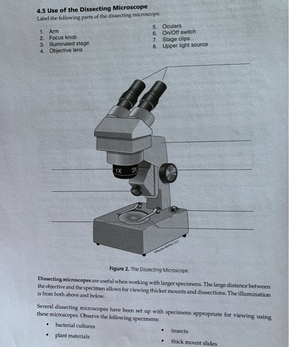 Solved 4 5 Use Of The Dissecting Microscope Label The Fol