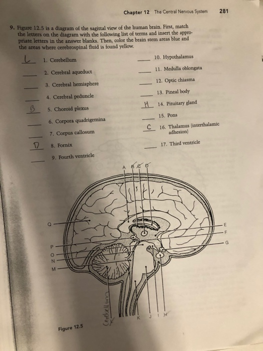 Bestseller: Chapter 7 Central Nervous System Answers