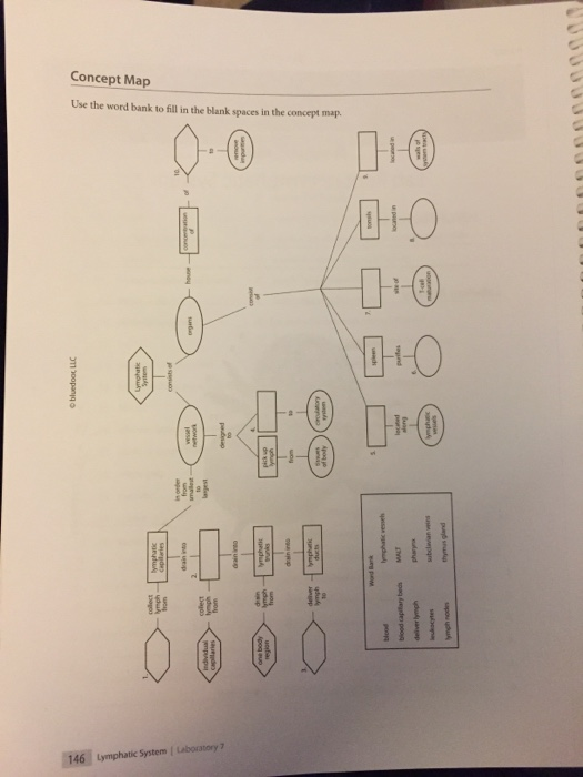 Solved: Concept Map Use The Word Bank To Fill In The Blank ...