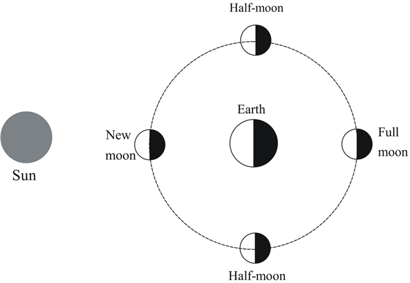 solved: at what times of the day or night does the half-moon ri...    chegg.com  chegg