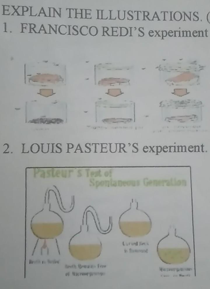 EXPLAIN THE ILLUSTRATIONS. 1. FRANCISCO REDIS experiment 2. LOUIS PASTEUR S experiment. Pasteur S Test of Spontaneous Gener