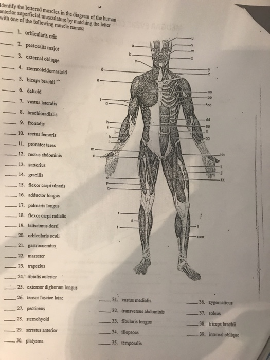 Diagram Of Body Muscles And Names / Naming Skeletal Muscles Anatomy And Physiology I ...