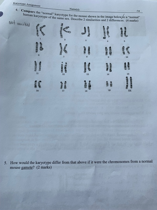 Solved: Karyotype Assignment Name(s) /34 4. Compare The