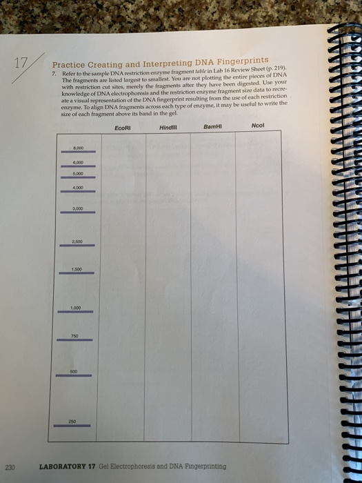 Gel Electrophoresis And Dna Fingerprinting Lab Worksheet ...
