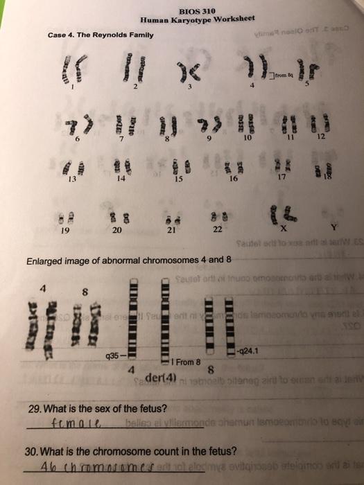 Solved: BIOS 310 Human Karyotype Worksheet Case 4. The Rey ...