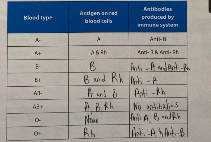 Solved: Blood Type Antigen On Red Blood Cells Antibodies P...   Chegg.com
