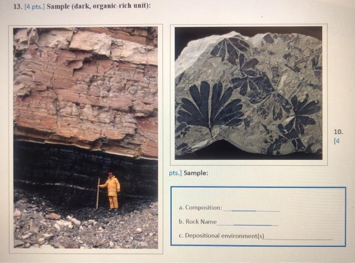 13. (4 pts.) Sample (dark, organic rich unit): 10. 14 pts.] Sample: a. Composition: b. Rock Name c. Depositional environment(
