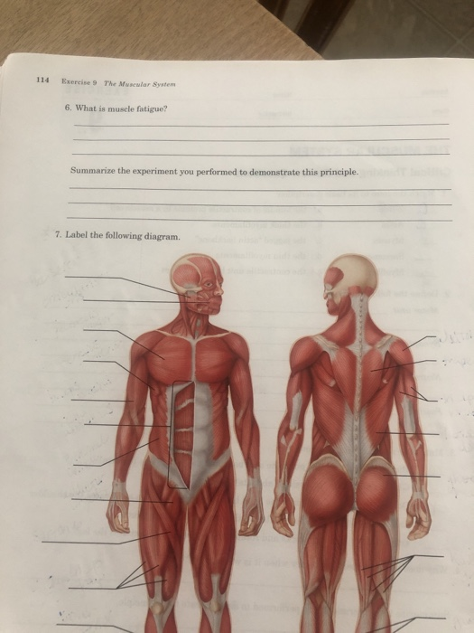 Solved 114 Exercise 9 The Muscular System 6 What Is Musc Chegg Com