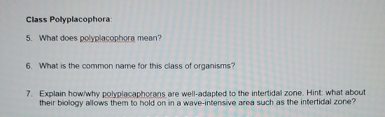 Solved Class Polyplacophora 5 What Does Polyplacophora Chegg Com
