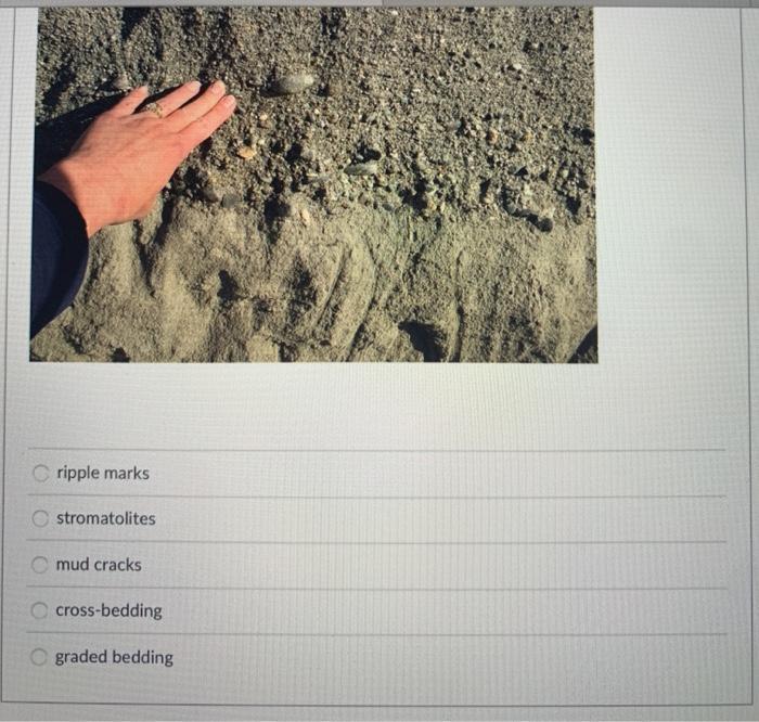 Cripple marks stromatolites mud cracks cross-bedding graded bedding