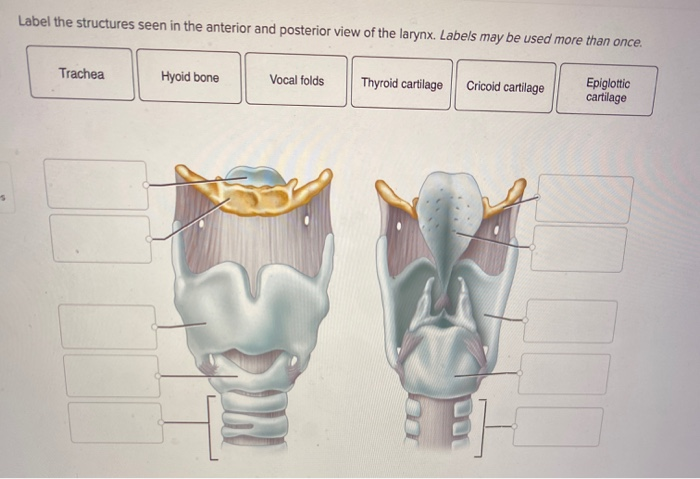 Solved Label The Structures Seen In The Anterior And Post