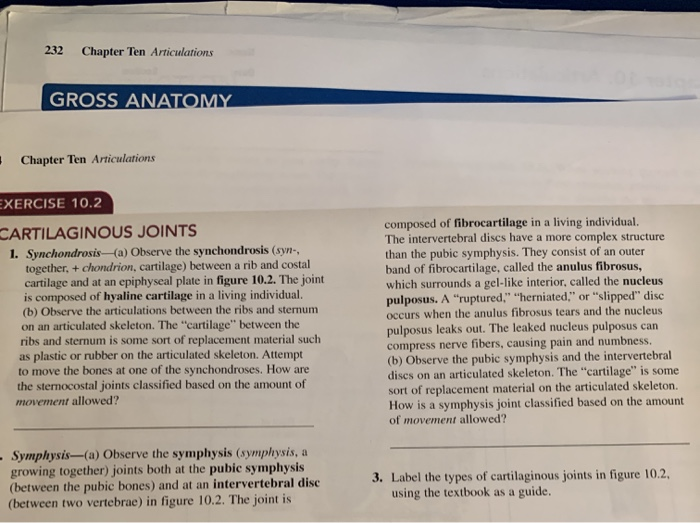 Solved 232 Chapter Ten Articulations Gross Anatomy Chap Chegg Com Meaning of synchondrosis medical term. 232 chapter ten articulations gross