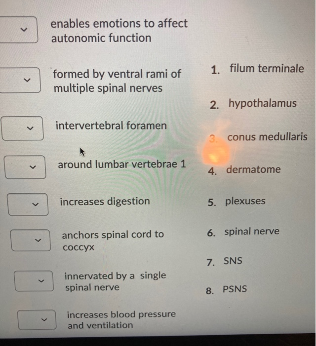 Solved Enables Emotions To Affect Autonomic Function 1 F Chegg Com It gives longitudinal support to the spinal cord and consists of two parts: chegg